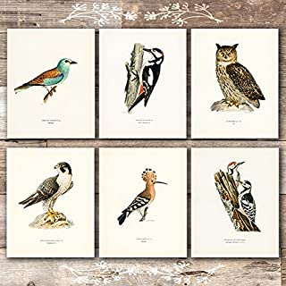 bird prints set