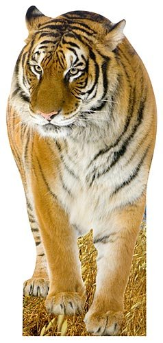Jungle Safari Tiger Cardboard Cutout Standee Standup Prop Party Supplies Decorations Decor Backdrop Background