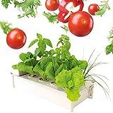 CRZJ Sistemas de Cultivo de hidroponía para Interiores, Herramientas de hidroponía para Interiores con riego automático de Bricolaje, 8 Agujeros