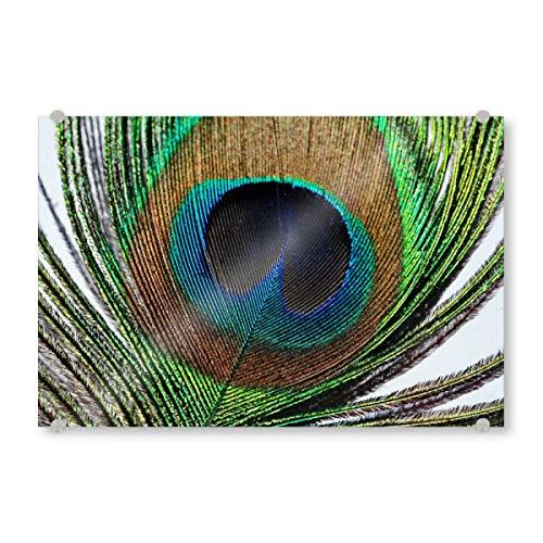 artboxONE Acrylglasbild 120x80 cm Tiere Pfauenfeder makro Bild hinter Acrylglas - Bild pfau Feder