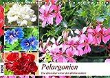 Pelargonien. Die Klassiker unter den Blühwundern (Tischkalender 2020 DIN A5 quer)