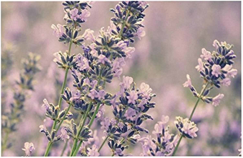 KESS InHouse RD1154ADM02 Robin Dickinson Smell The Flowers Lavender Green Dog Place Mat, 24  x 15