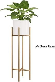 Amazon.es: tian qi zheng - Marcadores para plantas / Huertos ...