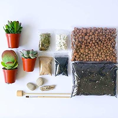 ConcreteLab&Co Terrarium DIY Kit für Sukkulenten und Kakteen Pflanzen mit Schritt-für-Schritt-Anleitung inkl. Erde Kohle Kieselsteine Sphagnum Moos Sand Treibholz & Bürste