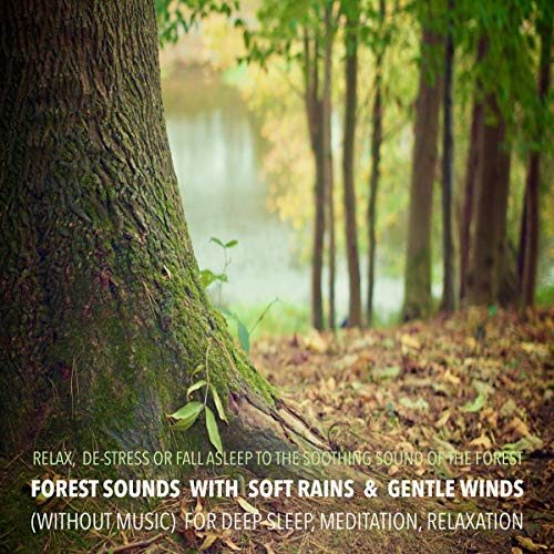 Forest Sounds with Soft Rains & Gentle Winds (without music) for Deep Sleep, Meditation, Relaxation cover art