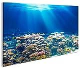islandburner Bild Bilder auf Leinwand Unterwasser Tauchen