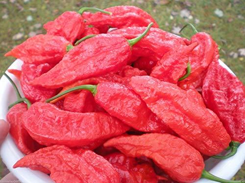 100 semillas Naga Jolokia más 100 Trinidad Scorpion Butch T Semillas