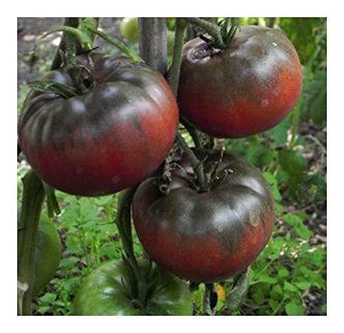 Tomate Black from Tula - tomate beefsteak noir - 20 graines