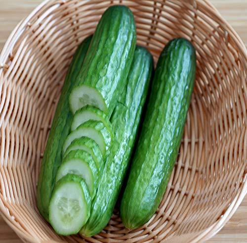 Gurke Tendergreen - Salatgurke - süß umd ertragreich - 10 Samen