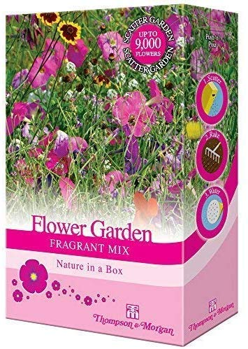 Mixed Flower Scented Garden Plant Seed Grow Your Own Cornflower, Sweet Pea & Stocks Providing Aroma and Colour 1 x 15g Pack by Thompson & Morgan