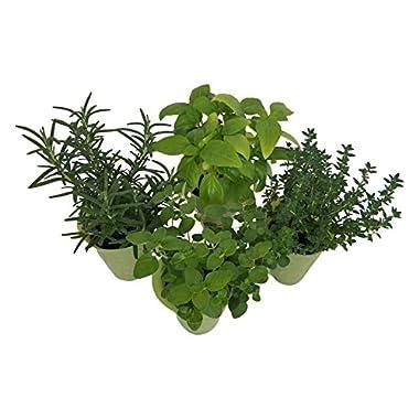 Micky's Minis 2  Mini-Herbs, Mini, Green