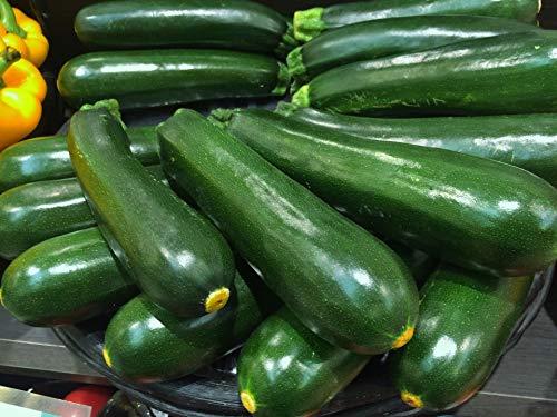 Zucchini frisch 1 kg Packung aus Spanien
