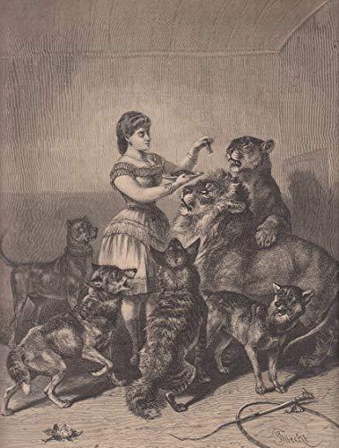 Zirkus - Die Tierbändigerin Therese Kaufmann im Löwenkäfig beim Füttern der Löwen und Hunde. [Grafik]