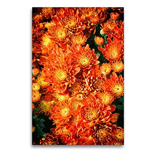 CALVENDO Premium Textil-Leinwand 60 x 90 cm Hoch-Format Fellbacher-Wein Chrysanthemen, Leinwanddruck von Nina Schwarze