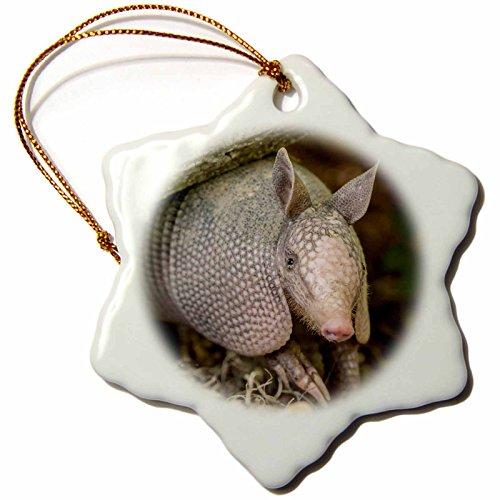 3dRose USA, Louisiana, Lake Martin. Young nine-banded armadillo. - Snowflake Ornament, 3-inch (orn_259382_1)