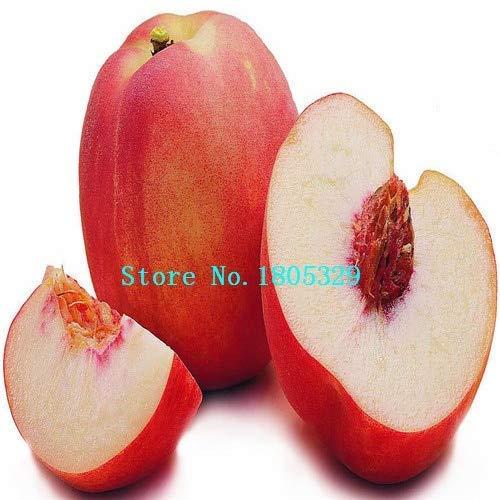 Bloom Green Co. GGG Enanos bonanza melocotones, Melocotonero - Semillas de durazno - Semillas de frutas semillas de bonsai - 1 pieza: Blanco