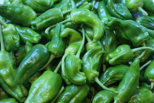 Padron pimienta, pimientos de Padron- 40 Semillas - caliente/dulce/suave, español de la herencia! por wbut2023