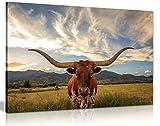 Cow Prints Longhorn Steer Animal Wildlife Canvas Wall Art Picture Print (36x24)
