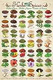 Küche - Kräuter & Gewürze - Poster Plakat Druck -