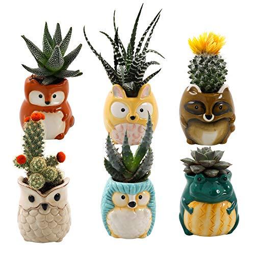 Matty's Garden Animal Ceramic Succulent Planters Set of 6 | 2.5 Inch Small Cactus Pots with Drainage Hole Raccoon Owl Rabbit Hedgehog Frog Fox