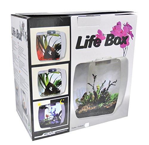 Lucky Reptile LB-30W Life Box 30 Designterrarium aus Acrylglas, weiß