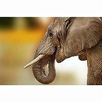 1000個の木製大人のパズル、減圧レジャーと環境保護のパズル、最高のホリデーギフト-象の牙(50x75cm)