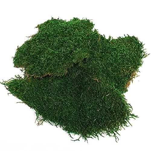 Eurofoto Plattenmoos konserviert   Flachmoos zum Basteln   Moosmatten zur Dekoration   Farbe Grün   Karton mit 250g / 500g / 1000g Inhalt