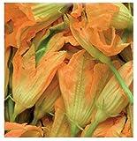 Inception Pro Infinite 40 C.ca Semi Zucchino da fiori - Cucurbita Pepo In Confezione Originale Prodotto in Italia - Zucchine da fiore