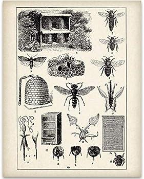 Best bee hive art Reviews