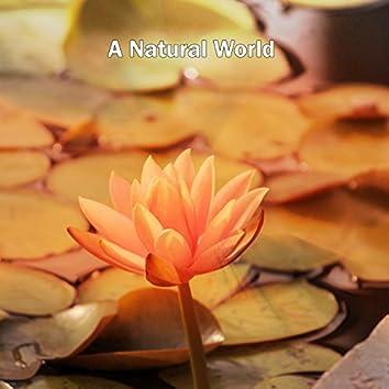 A Natural World
