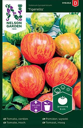 Tomatensamen Tigerella - Nelson Garden Samen für Gemüsegarten - Tomaten Saatgut (36 Stück) (Einzelpackung)