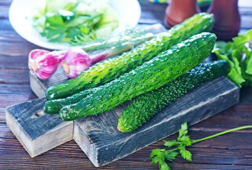 200+ Long Green Cucumber Seeds for Planting, Non-GMO Organic Heirloom Cucumber Seeds