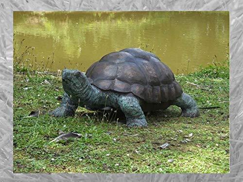 IDYL Escultura de bronce de tortuga   35 x 55 x 90 cm   Figura de animal de bronce hecha a mano   Escultura de jardín o estanque   Artesanía de alta calidad   Resistente a la intemperie