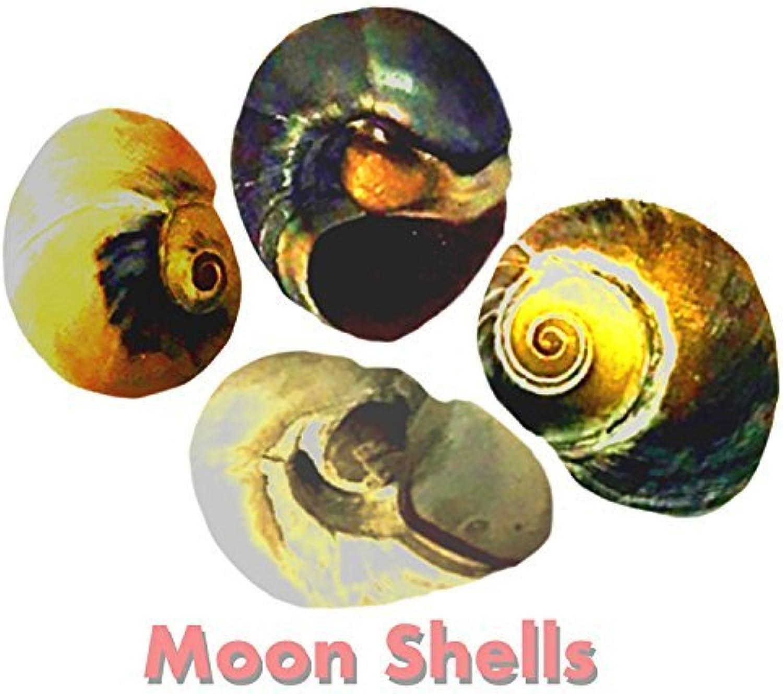 Hermit Crab Shells 4 Pack Medium Natural Sceneggiatura dalla vita marina Wild Habitat è garantita per attrarre pesci e animali acquatici a Shells