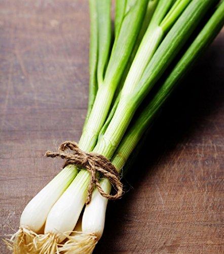 Hill Creek Seeds Evergreen Bunching Onions Seeds - Hardy Heirloom Scallions - Non-GMO 1,000 Seeds