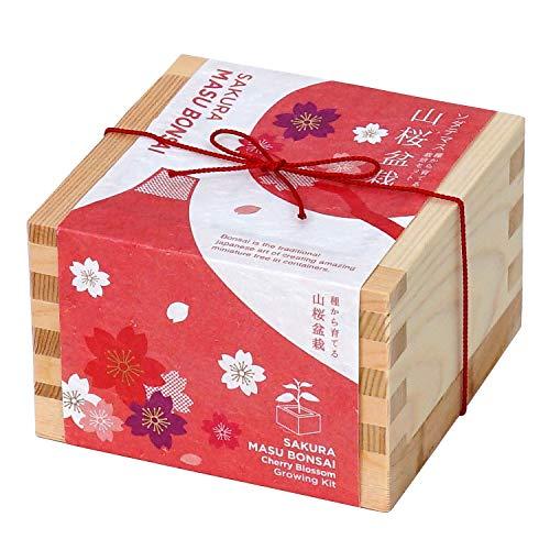 盆栽栽培セット ソダテマス 桜