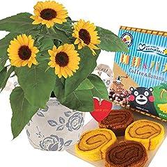 花のギフト社 ひまわり鉢植え ロールケーキ 花とスイーツ 鉢花 父の日