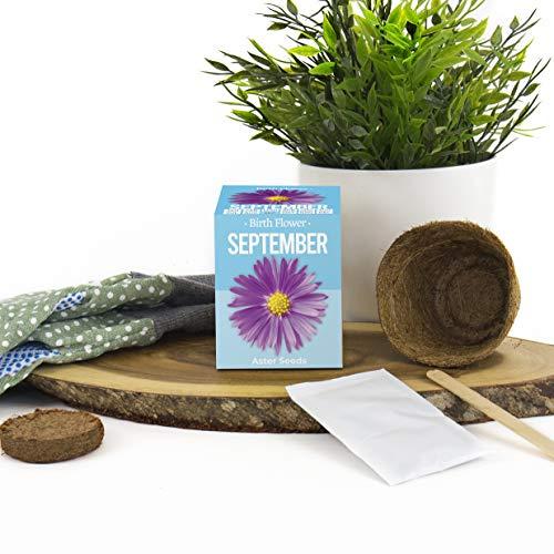 Kit de culture de fleurs d'anniversaire (septembre)