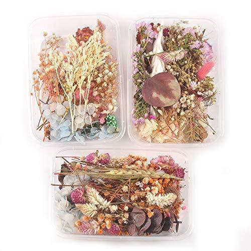 DRI Flor Seca 1 Caja Colorida al Azar Real Flor Seca Plantas secas para Hacer artesanía Flores prensadas Accesorios de joyería de Bricolaje decoración del hogar