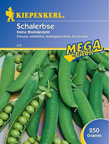 Erbsen - SchalErbsen - Kleine Rheinländerin, 200 g Mega-Pack von Kiepenkerl