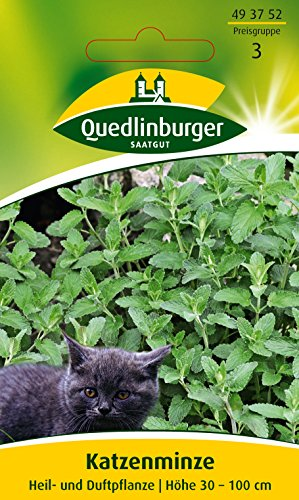 Katzenminze, Nepeta cataria, ca. 50 Samen
