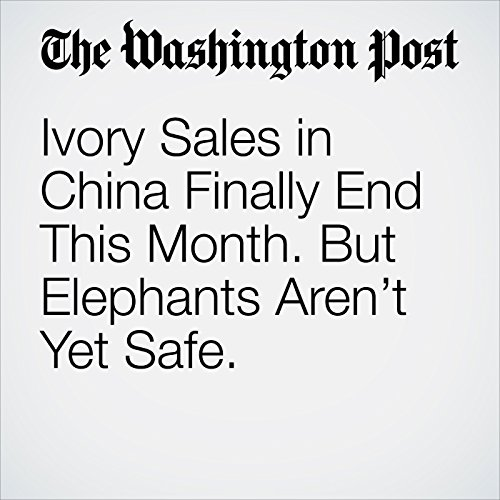Ivory Sales in China Finally End This Month. But Elephants Aren't Yet Safe. copertina