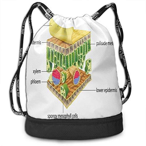 shenguang Kordelzug Rucksäcke Taschen, Anatomie eines Blattes Namen der mikroskopischen Teile Schwammige Stoma-Epidermis-Schichten, verstellbar
