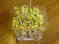 スプラウト栽培キット交換用カイワレ大根種子セット