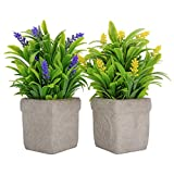 Phyachelo Paquete de 2 plantas artificiales en macetas para decoración del hogar, decoración de interiores, decoración de otoño, flores artificiales de lavanda para escritorio