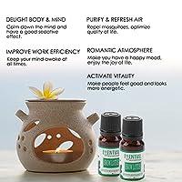 加湿器の良い睡眠の質のための作業領域に効果的な有用なエッセンシャルオイルアロマセラピーエッセンシャルオイル(Animal, Snow lotus)