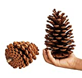 Xaviera Conos de pino natural de Navidad grandes de la decoración de la piña de Navidad de Año Nuevo Fiesta de la Decoración de Ornamento para Suministros del Hogar