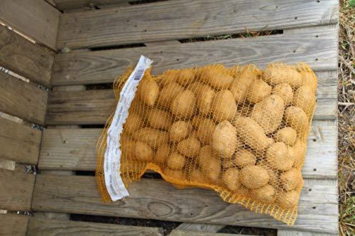 Livraison gratuite 10 kg Pomme de terre Française - bintje - L'économique et polyvalente - Livrée chez vous - Non lavée pour conservation allongée - Filet