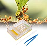 Pssopp Caja de cría de hormigas de acrílico para insectos transparente, para hormigas, casa de cría de hormigas, caja de alimentación de hormigas, granja de hormigas