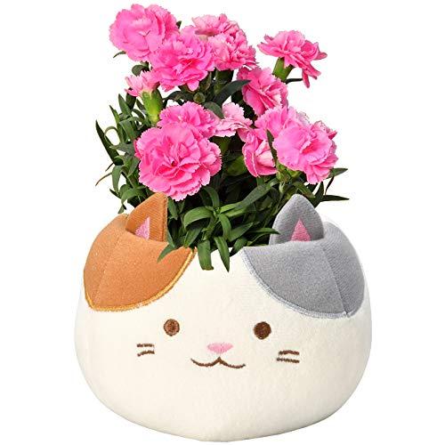 花のギフト社 母の日 カーネーション 三毛猫 鉢花 花鉢 鉢植え プレゼント 花 鉢 フラワーギフト